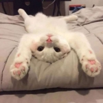 微信可爱猫咪头像图片
