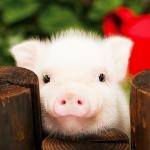 动物可爱头像高清图片,超萌关于动物的微信头像