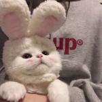 小猫照片可爱头像,高清可爱小猫的照片卖萌图片头像
