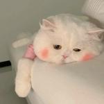 qq头像萌宠物图片,高清可爱的头像动物可爱萌图片
