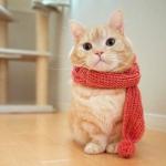 微信头像猫可爱,高清好看的猫咪头像可爱萌宠图片