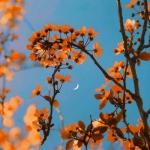 风景微信图像大全2021年图像 唯美花中月亮图片头像