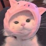 萌宠情头猫 高清一左一右的情头萌宠物猫图片