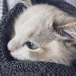 超可爱猫咪头像高清图片