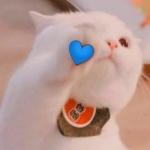 猫狗cp情头可爱 直萌情侣头像可爱动物一对高清图片
