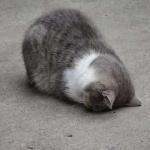 起床困难户头像 高清超可爱的猫咪起床困难头像图片