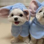狗狗情头可爱 高清超可爱的狗狗情头图片