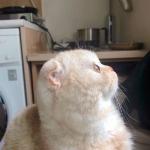 微信头像图片2021最火爆猫 可爱2021超好看的猫咪微信头像图片