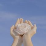 白玫瑰花图片头像 清新淡雅白玫瑰花图片头像