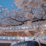 唯美小清新樱花头像 高清好看的唯美意境樱花头像图片