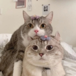 情头可爱猫咪一对 高清猫咪情头可爱一对情侣头像图片