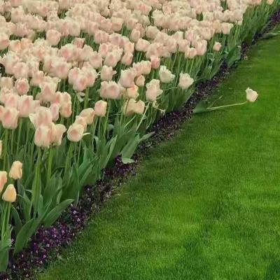 微信头像鲜花唯美意境