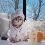 微信头像猫咪超酷 可爱萌宠图片猫咪头像穿衣服超酷