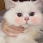 微信头像可爱的小动物 好看微信头像可爱的萌动物图片