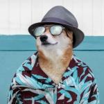2021新版微信头像动物 高清时尚的2021新款头像小动物头像图片