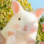 小动物可爱卖萌照片头像 可爱萌萌哒适合做头像的动物图片
