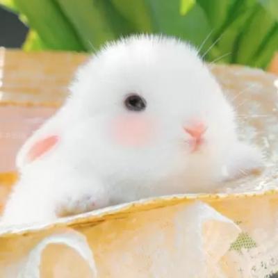 小动物可爱卖萌照片头像