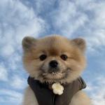 清新呆萌可爱小狗狗头像图片大全 高清可爱的最萌小奶狗图片头像