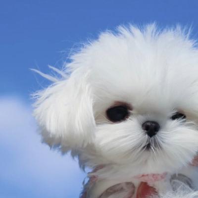 清新呆萌可爱小狗狗头像图片