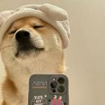 狗拿手机自拍的头像 高清自恋狗狗拿苹果手机拍照的照片头像
