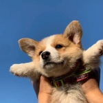 可爱的狗头像图片 头像狗狗可爱 蠢萌 清新