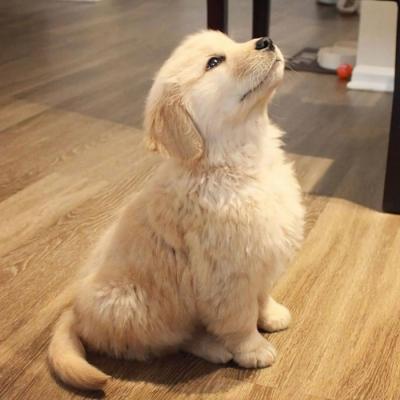 高清小狗头像