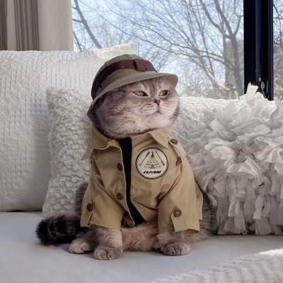 帅气猫咪头像高清