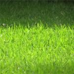 绿色草坪头像 高清清新的绿色草坪护眼头像图片