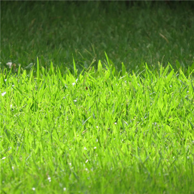 绿色草坪头像