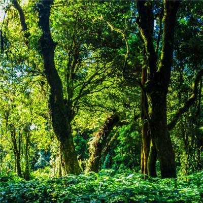 热带雨林头像图片
