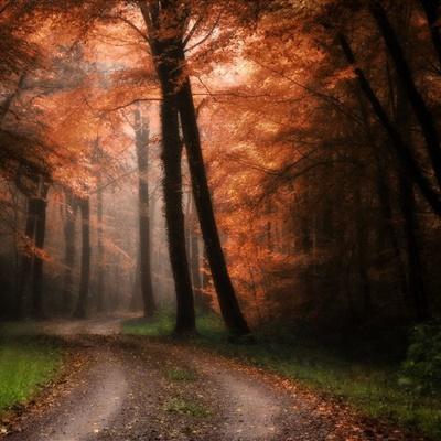 林间小道头像