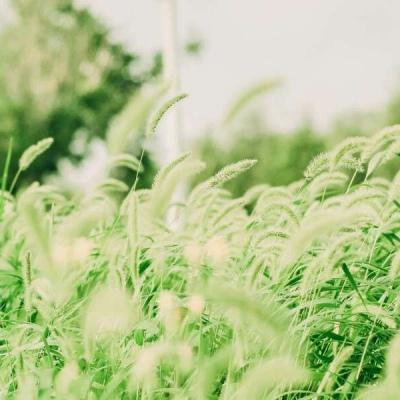 微信头像图片清新绿色