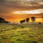 大自然绿草地风景 浅绿色的风景草地图片
