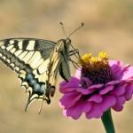 最美的蝶恋花头像图片 花间唯美舞蝶
