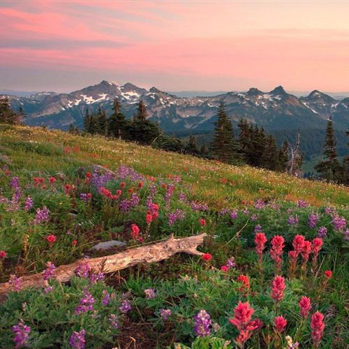 微信头像自然风景唯美