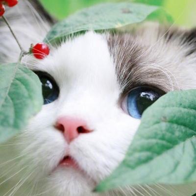 可爱到憨的动物头像