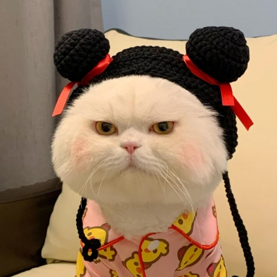 可爱胖猫咪头像