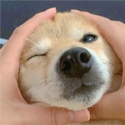 微信专用头像狗