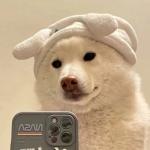 微信可爱沙雕搞怪头像,高清可爱又皮又欠揍的头像图片