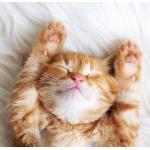 可爱猫咪睡觉头像图片