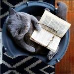学霸猫咪头像图片